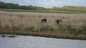 Mooie dieren in prachtige natuur varen Noord-Nederland en Waddeneilanden